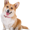 want to get better?? look a... - last post by Corgi